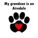 My Grandson Is An Airedale Women's T-Shirt
